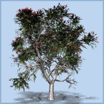 Staghorn sumac DR 3D Models Dinoraul