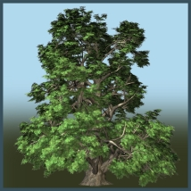 Small Leaved Lime 3D Models Dinoraul