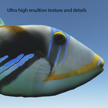 Realistic Triggerfish Animals Bijan_Studio