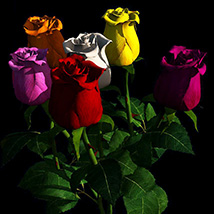 Rose pack 3D Models Bijan_Studio