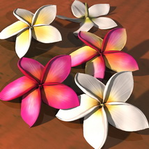 Plumeria Flower Pack 3D Models Bijan_Studio