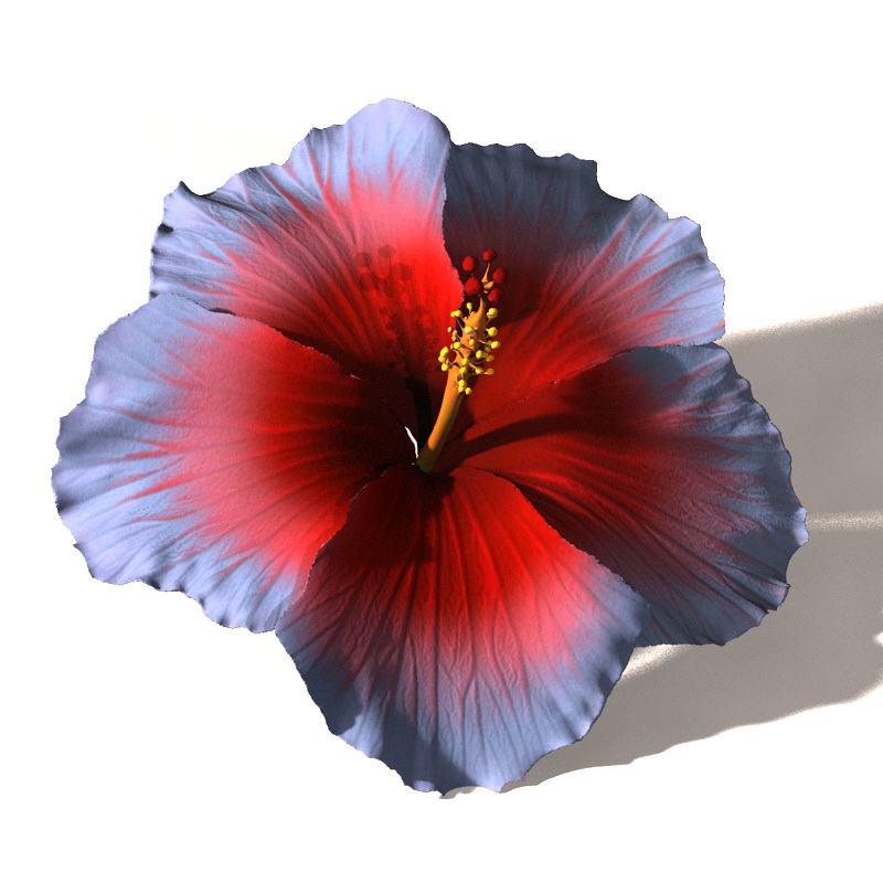 Hibiscus Flower For Hair 3d Figure Assets Bijanstudio