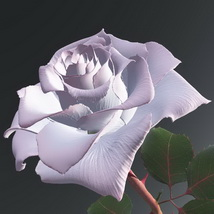 White and pink rose 3D Models Bijan_Studio