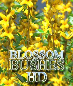 Flinks Blossom Bushes HD 3D Models Flink