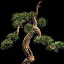 Bonsai Tree 3D Models Bijan_Studio