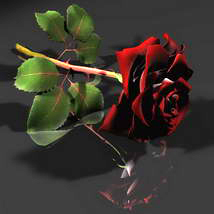 3D Red & White Rose 3D Models Bijan_Studio