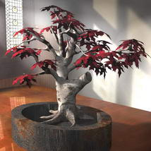 3D Maple Bonsai Tree 3D Models Bijan_Studio