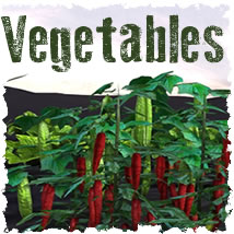 Vegetable Plants 3D Models dexsoft-games