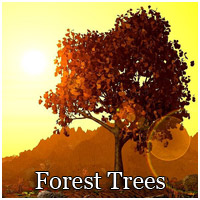 Forest Trees - Extended License 3D Models Extended Licenses RPublishing