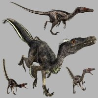 VelociraptorDR - Extended License 3D Models Dinoraul