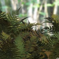 Ferns 2012 DR - Extended License 3D Models Extended Licenses Dinoraul