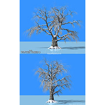 Flinks Winter Trees 3 image 1