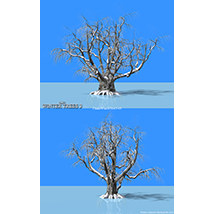 Flinks Winter Trees 3 image 3