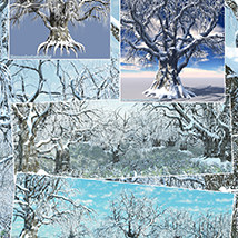 Flinks Winter Trees 3 image 8