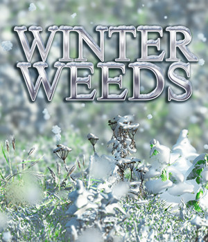 Flinks Winter Weeds by Flink