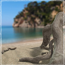 Photo Props: Driftwood image 5