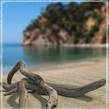 Photo Props: Driftwood image 6