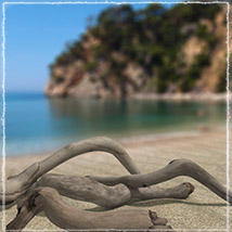 Photo Props: Driftwood image 7
