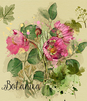 Botanica:  A Mini Design Kit 2D Graphics Crystal46