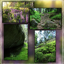 Photo Backgrounds: Forest Vistas image 1