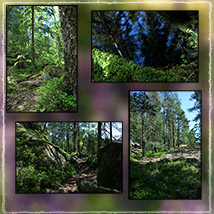 Photo Backgrounds: Forest Vistas image 2