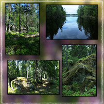 Photo Backgrounds: Forest Vistas image 3