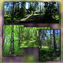 Photo Backgrounds: Forest Vistas image 4