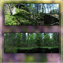 Photo Backgrounds: Forest Vistas image 5