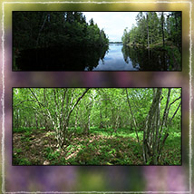 Photo Backgrounds: Forest Vistas image 6