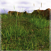 Photo Plants: Grass World image 1