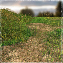 Photo Plants: Grass World image 2