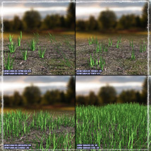 Photo Plants: Grass World image 3