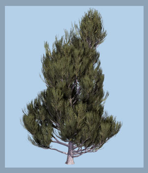 Juniperus communis DR 3D Models Dinoraul