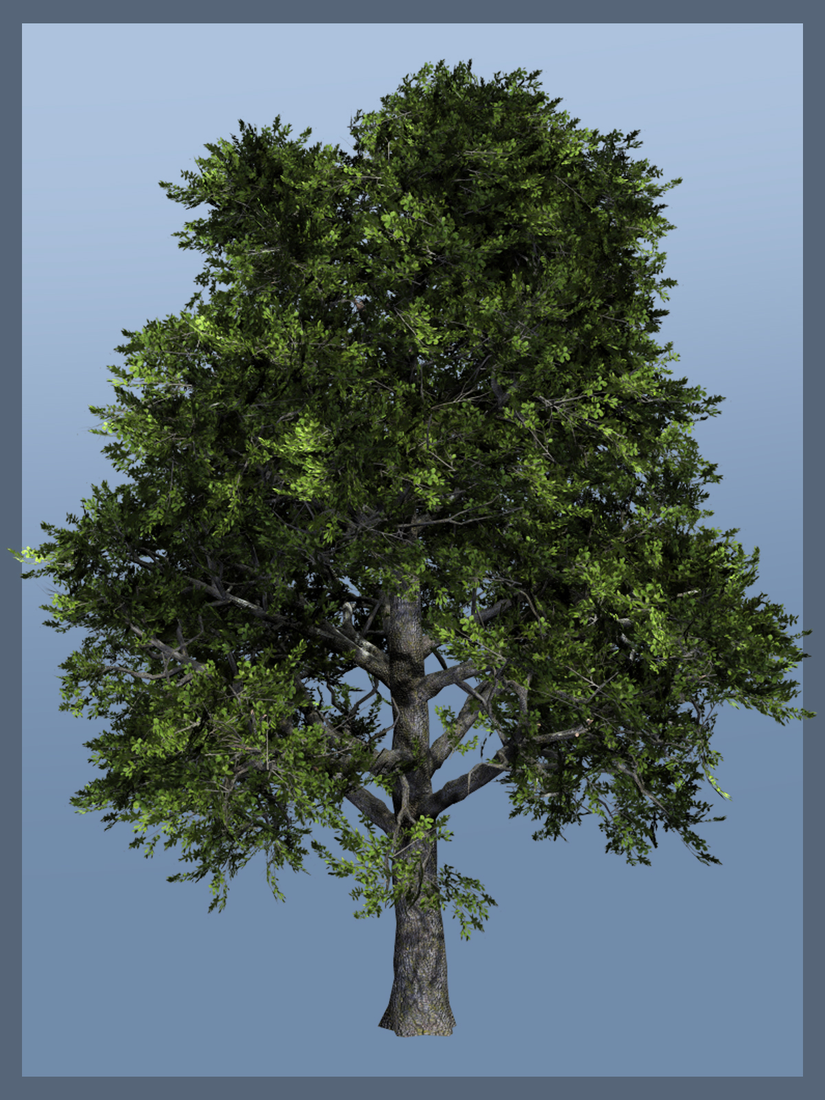 Holm Oak DRbyDinoraul()