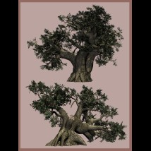 Old Trees DR 2015 image 1