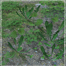 Photo Plants: Weeds Plant World - Extended License image 1