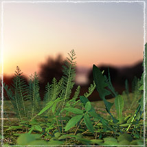Photo Plants: Weeds Plant World - Extended License image 2