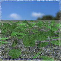 Photo Plants: Weeds Plant World - Extended License image 3