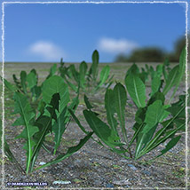 Photo Plants: Weeds Plant World - Extended License image 5