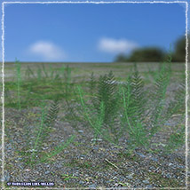 Photo Plants: Weeds Plant World - Extended License image 6