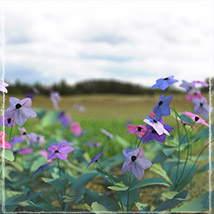 Photo Plants: World of Wildflowers - Extended License image 2