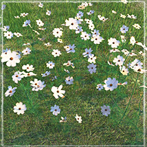 Photo Plants: World of Wildflowers - Extended License image 3