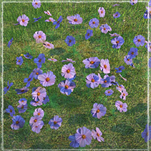 Photo Plants: World of Wildflowers - Extended License image 5
