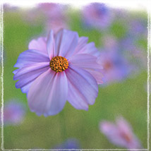 Photo Plants: World of Wildflowers - Extended License image 6