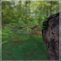 Photo Plants: World of Ferns - Extended License image 1