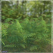Photo Plants: World of Ferns - Extended License image 2