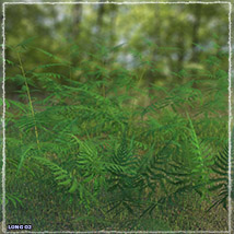 Photo Plants: World of Ferns - Extended License image 3