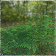 Photo Plants: World of Ferns - Extended License image 4