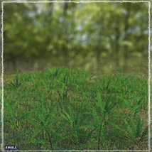 Photo Plants: World of Ferns - Extended License image 5