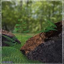 Photo Plants: World of Ferns - Extended License image 6